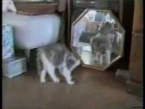 【おもかわいい!】youtubeで最も再生されている猫ちゃんハプニング集!!!