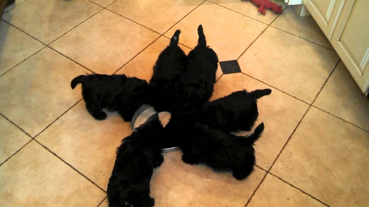 【可愛いすぎ!!】ミルクをあげると台風みたいになる子犬達が話題!!