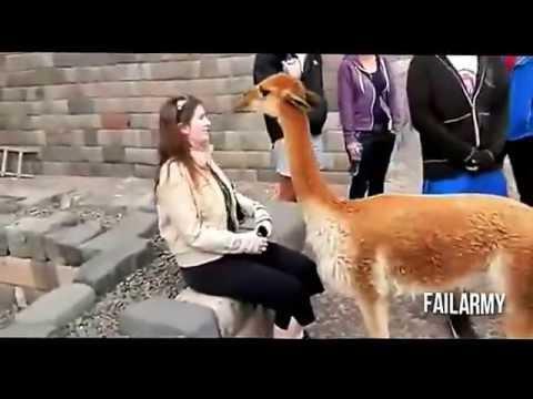 【おもしろ動画】動物達の面白ハプニング集