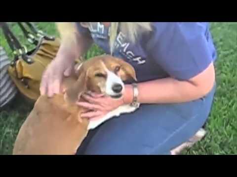 【可愛い!!】数日ぶりの飼い主に感情大爆発した犬