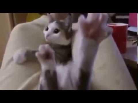 かわいいおもしろ猫動画まとめ かわいすぎる仕草【見てて飽きない】