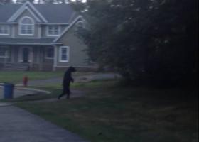 【すごっ!!】人間のように2本足で歩くクマの動画が話題に!!
